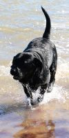 Buster on Beach 2 by DesuDan