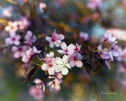 Spring detail(V). by Phototubby