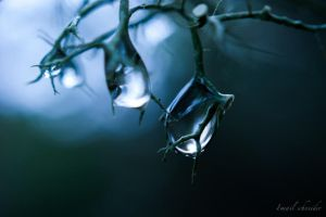 Droplets Dangling From The Lichen by isischneider