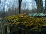 Moss by James-Shy