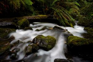 Mt. Field National Park I by MichaelG85