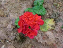 Red Flowers by leandroconradt95