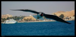 its time to fly by rope-Focus-admission