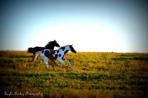 Full Gallop by Kayluuh
