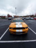 Ford Shelby GT500 by short-shift90