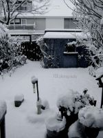 My garden in the winter. by ASFmaggot