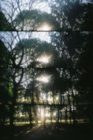 woods of man by unresponsive
