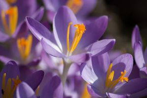 spring is coming by christinegeier