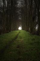 The path into the light by PeterK