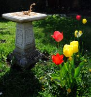 Spring Sundial by Forestina-Fotos