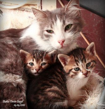 Nature of Cats_03 by princessfromsea