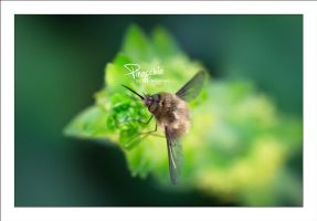 Pinocchio by sG-Photographie