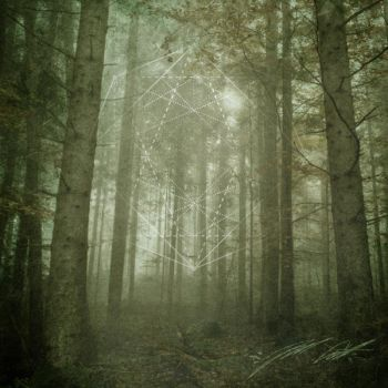 Forest Tranquility III by manfishinc