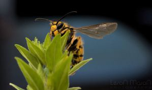 Wasp_2012_1 by LeronMasoN