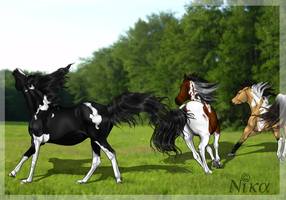 How arabs greet the spring by Myhorseismylife