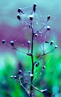 Dew Phone wallpaper by YadavThyagaraj