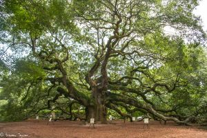 Angel Oak by fakeprofileofme