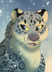 A Snow Leopard Portrait by marymouse