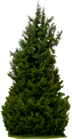 Tree 61 png HQ by gd08