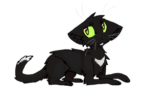 Ravenpaw by TheBBTouho