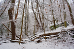 Winter Forest Stock 21 by AreteStock