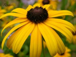 One Yellow by Rounette