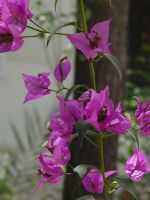 Flowers from Morocco by nibbler-stock