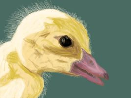 Duckling by Micheal-C