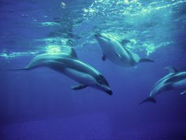 dolphins five by sugartosalt