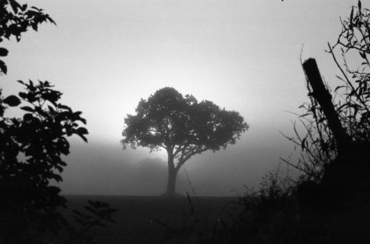 Tree in the Fog by Nigel-Kell
