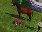 a baby horse is born by sims-3-screenshots