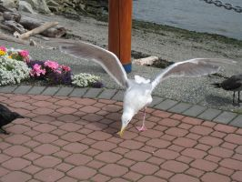 Sea Gull Wings 6 by solarka-stock