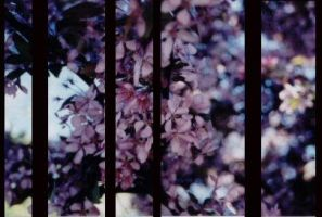 flowers of spring_curtains by Hiox