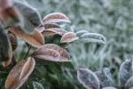Frosty Leaves by matejpaluh