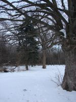 Bare Winter Tree Background 6 by FantasyStock