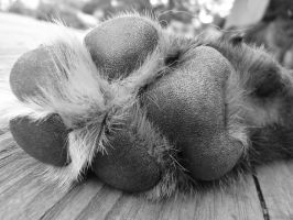 Dog Paw by safire777