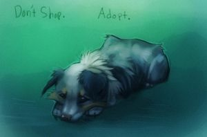 Adopt by Sciurida