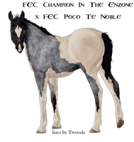 Enzo x Noble Filly - SOLD by FallbrookeEC
