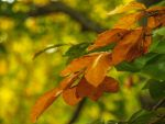 colors of autumn by HeretyczkaA