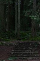 Dark forest stock 2 by rustymermaid-stock