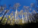 EagleView Trail to Beaver Creek by 1001G