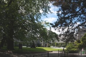 UCC through Trees by Quinzy