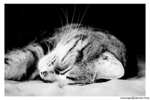Another sleeping cat by cat-lovers