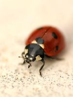 The Little Lady Bird by Liviu-Terinte