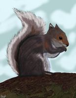 Grey squirrel by mannafig