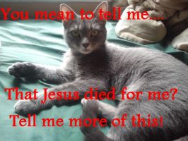 Precious Cat Meme - Jesus died for you and me by 370wii
