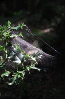 Holly and Webbing by OblivionMedia