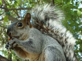 Mexican Squirrel by Yukilefay