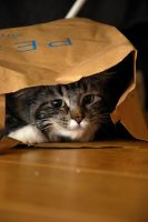 Cat in a bag :) by Aishlling