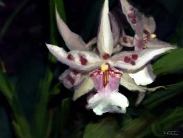 painterly orchid by Wolfguardian